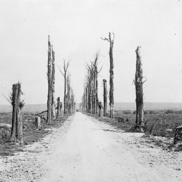 Messines road, seen from the Chateau de la Hutte. In the background is Messines Ridge © Imperial War Museums (Q 17865)